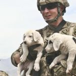 These photos of troops and ridiculously cute puppies will give you life