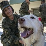 Here's what military families should think about before getting a pet