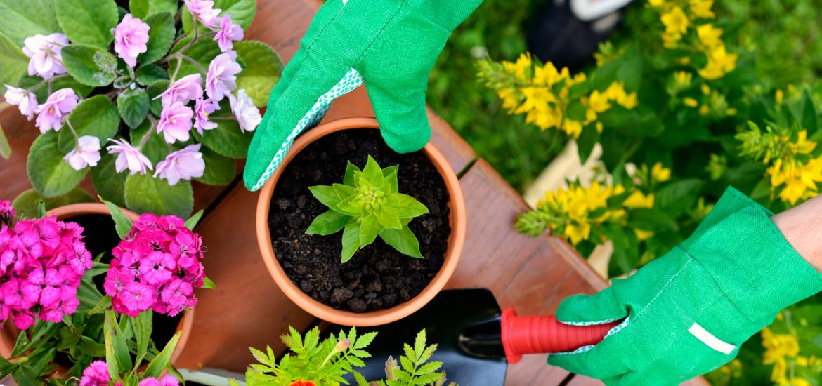 Here's how to try container gardening in base housing