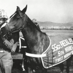 Here's the story of a Korean War horse that became a sergeant