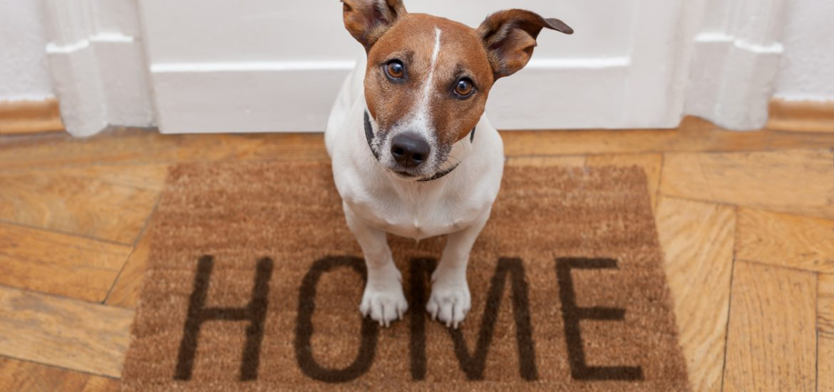 https://milspousefest.com/pet-friendly-hom…rs-and-landlords/