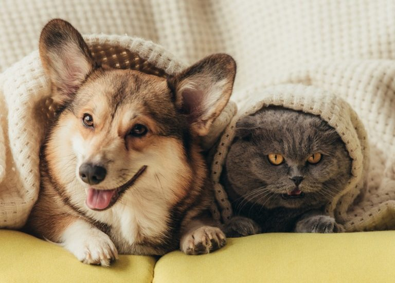 Tips For Making PCSs Easier On Your Furry Family Members