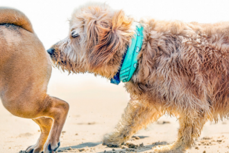 How Your Dog Should Greet Other Dogs